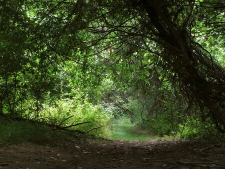 A peaceful path runs lazily into a dark forest                                photo