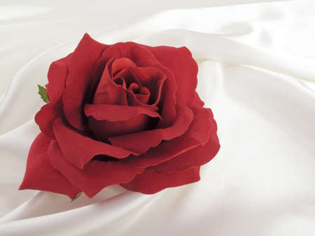 perfect silk rose on white satin...look for more valentine ideas in my portfolio!