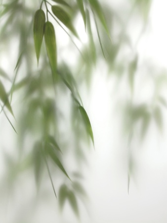Fresh bamboo sprigs appear misty behind a frosted glass door panel