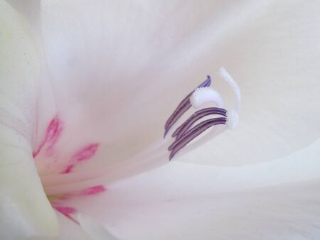 middle easter: Very close view of the center of a perfect gladiola