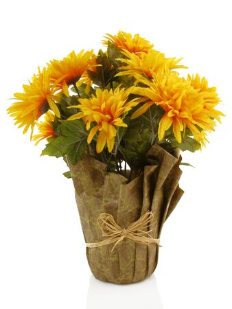 Isolated orange fall chrysanthemums in a wrapped pot photo