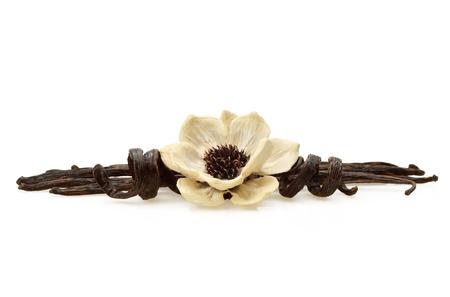 flor de vainilla: Vainas de vainilla con flores de madera elaborados a partir de elementos naturales en el fondo blanco Foto de archivo