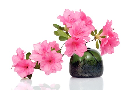 Beautiful pink azalea in glass vase on white photo