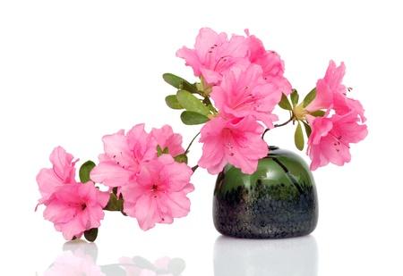 Beautiful pink azalea in glass vase on white Stock Photo - 13697687