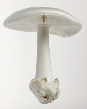 gills: Unknown mushroom
