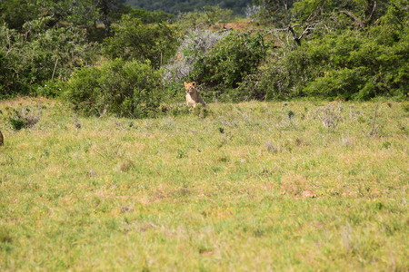 South Africa Imagens - 117154012