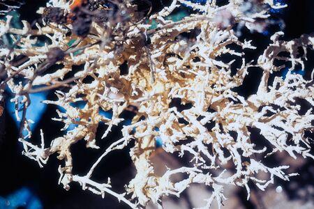 New year christmas handmade ornaments composition craft background 版權商用圖片