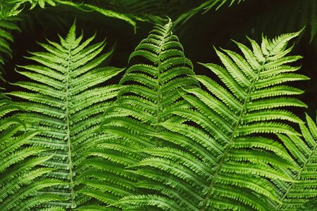 Green summer fern thicket in jungle forest background