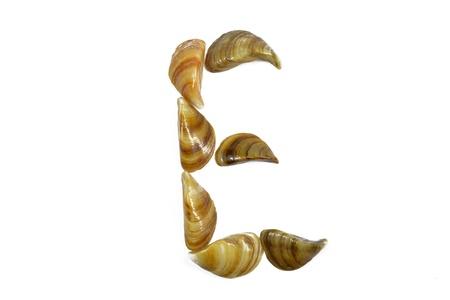 isolated shell letter E - white background,