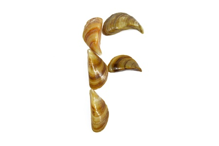 isolated shell letter F - white background, Stock Photo