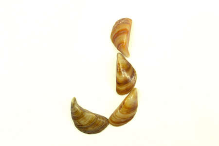 isolated shell letter J - white background,