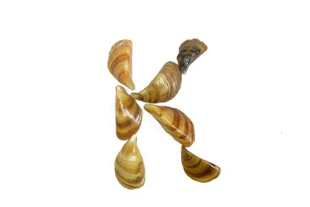 isolated shell letter K - white background, Stock Photo