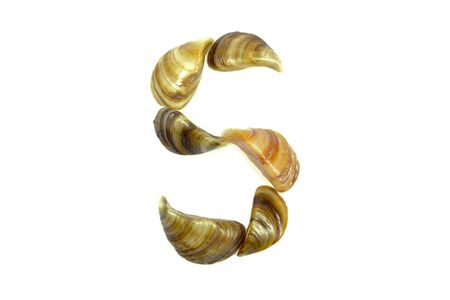 isolated shell letter S - white background,