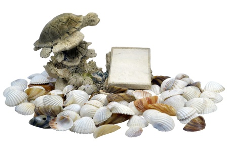 Turtle and shells Stock Photo - 17386053