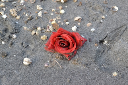 rose on the sand