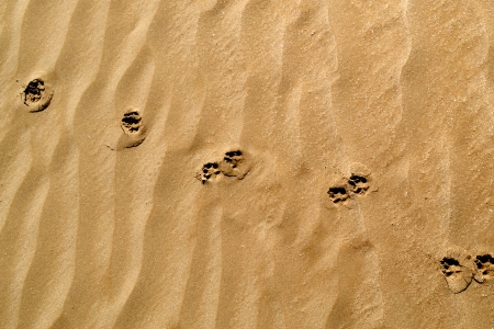 animal footprints in the sand