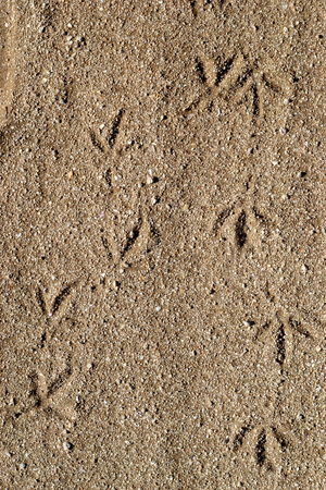 animal footprints in the sand photo