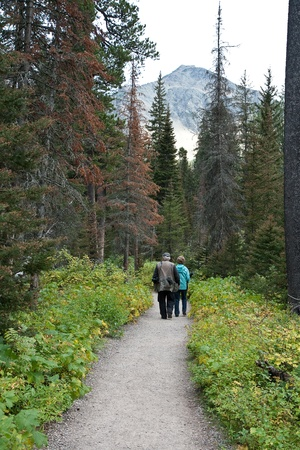Senoir couple walking away down a forest path.