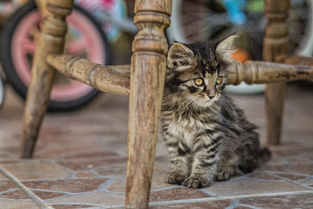Little maine coon sitting in the garden Stock Photo