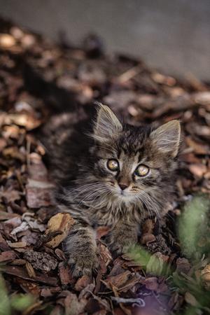 eyecontact: Kitten sitting in the garden. Facing in camera eyecontact. Stock Photo