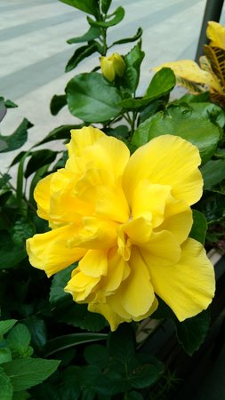 puberty: yellow flower Stock Photo