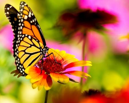 Image très colorée affichant un monarque sur une fleur brillante.
