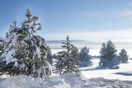 Fog in the hills with lots of snow covered trees. Stock Photo