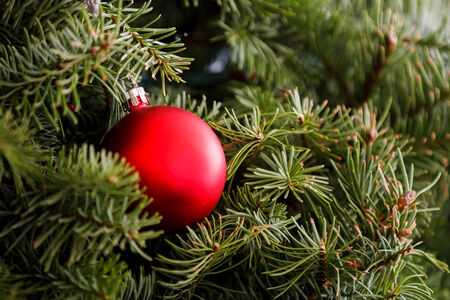 Single ornament supported by a christmas tree. Stock Photo