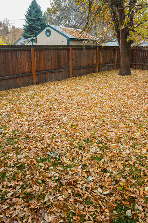 maybe: Wide angle view of leaves sitting on the lawn ready to be raked up and maybe played in.