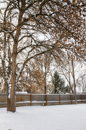 Wide angle view of a large tree growing in a backyard while the yard is covered in snow. Stock Photo
