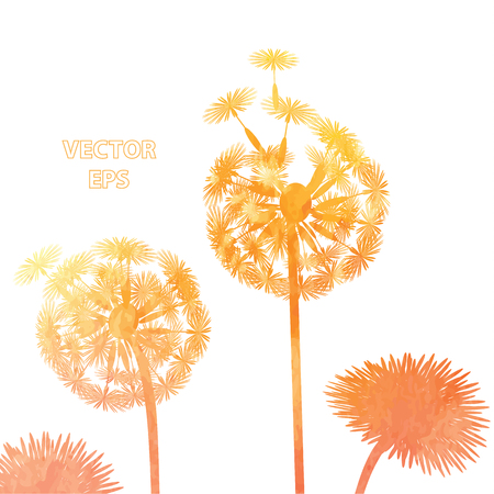 overblown: watercolor dandelion background Illustration