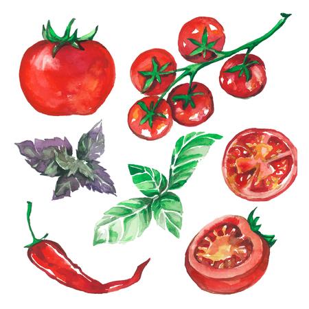 zestaw warzyw rysowane plamy akwarela i plamy z pomidorów, pieprz, bazylia