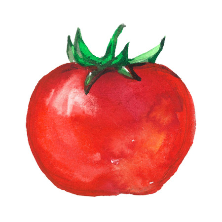 aquarelle tomate sur fond blanc