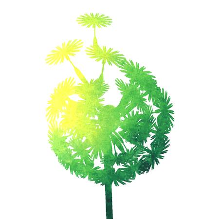 posterity: watercolor dandelion Illustration