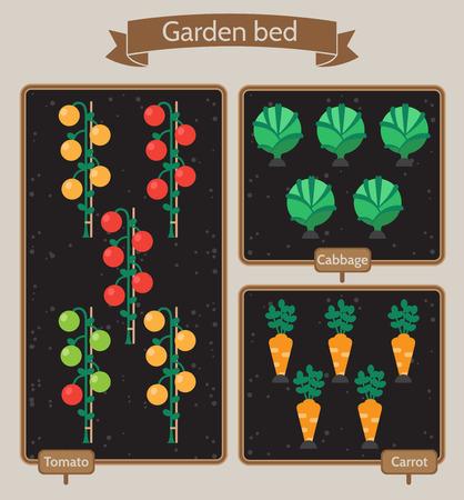 Gemüsegarten Planer flach design.Beds mit Kohl, Karotten, Tomaten
