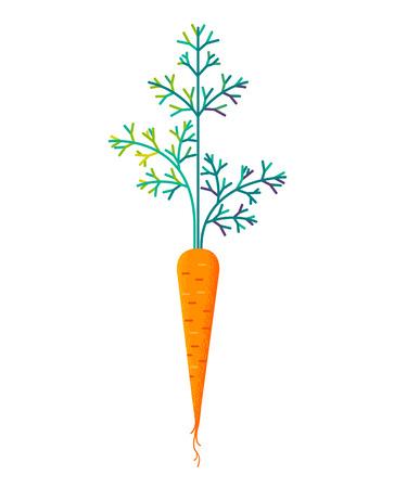 Ripe carrot icon. Illustration
