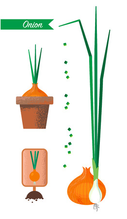 Set of images of onions, flower pot, sliced green onions Archivio Fotografico