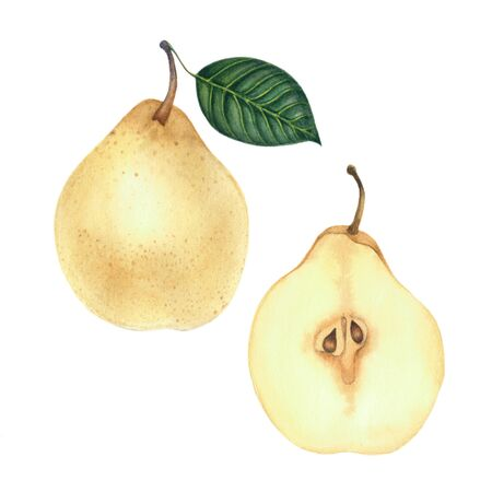 Whole pear with a leaf and half a pear isolated on white backgro Archivio Fotografico