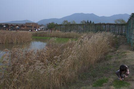 mountin: Suncheon Bay Landscape Stock Photo