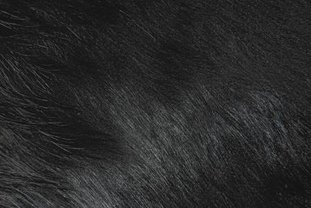 goatskin texture Stock Photo - 15685147
