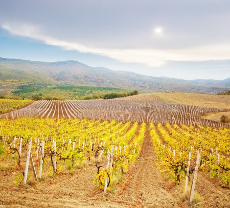 provision: Vineyard in Crimea, mountain in Crimea