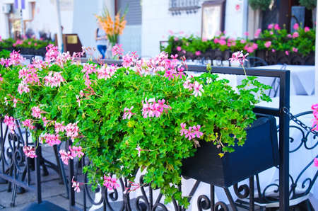 Flowerpot with lilac flowers in outdoor cafe photo