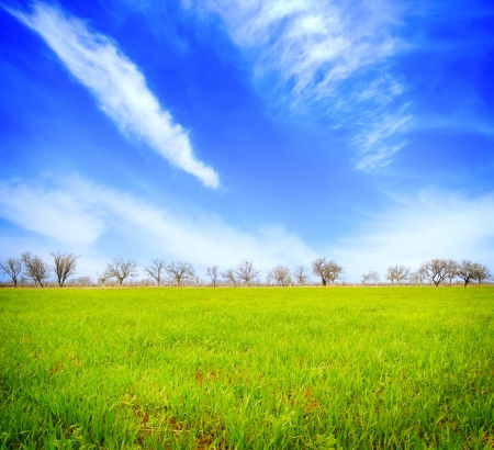 Field in Crimea, Green field and blue sky photo
