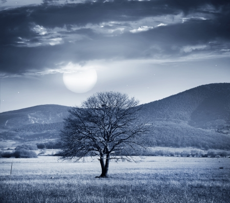 One tree and full moon photo