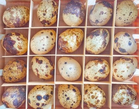 quail eggs Stock Photo - 18481012