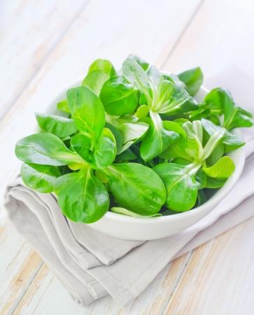 cornsalad: salad