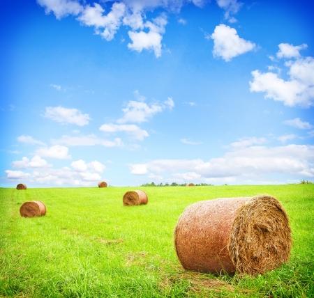 hay bale: haystack