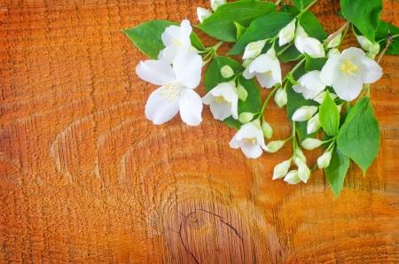 jasmin on wooden background photo