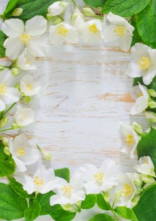 jasmine spring flowers frame on white background photo