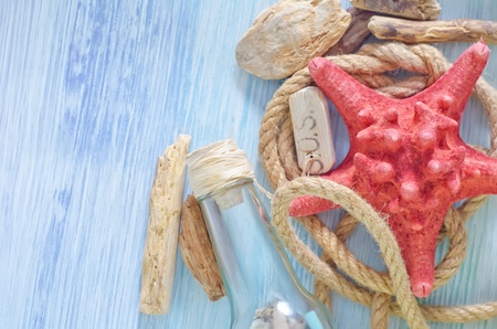 sea shells on blue background photo